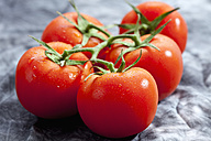 Vine tomatoes on grey background, close up - CSF018094