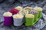 Mixed sprouts in container on tray, close up - CSF018130