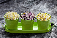 Various sprouts in container, close up - CSF018139
