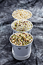Mixed sprouts in container on tray, close up - CSF018142