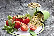 Shrub, tomatoes with mixed sprouts, close up - CSF018151