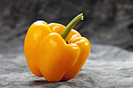 Yellow bell pepper on grey background, close up - CSF018192