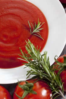 Plate with tomato sauce and vine tomatoes and rosemary - CSF018362