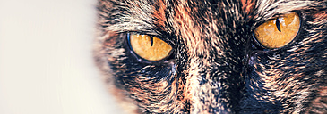 Spain, Close up of cats eye - WVF000334