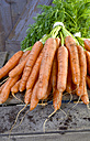 Germany, Bunch of carrots on wood - ONF000151