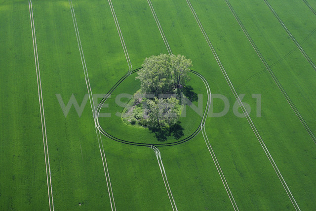 Germany, View of green field and tree at Harburg - FBF000002 - Frank Blum/Westend61