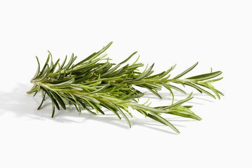Rosemary herb on white background, close up - CSF019078