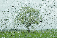 Raindrops on windowpane with apple tree in background - ELF000058