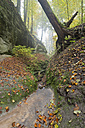 Germany, Autumn leaves in beech forest at Lake Constance - SH000691