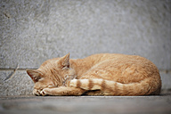 Germany, Baden Wuerttemberg, Cat sleeping on ground - SLF000060