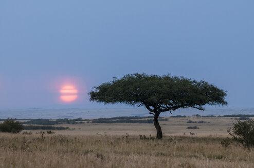 Africa, Kenya, Sunset at Maasai Mara National Park - CB000107