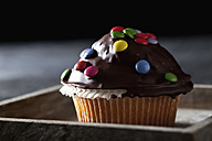 Chocolate muffin on wooden tray, close up - CSF019400