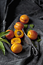 Apricots with leaves and knife on black textile, close up - CSF019351