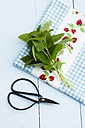 Fresh mint leaves with scissors on wooden table, close up - ECF000174