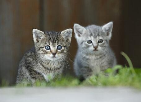 Germany, Baden Wuerttemberg, Kittens sitting in front of door - SLF000193