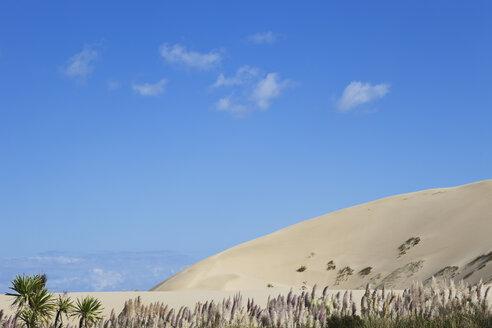 New Zealand, View of Te Paki Giant Sand Dunes - GW002276