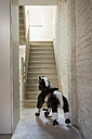 Rocking horse in house - FMKY000309