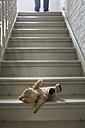 Teddybear on steps while man in background - FMKYF000333