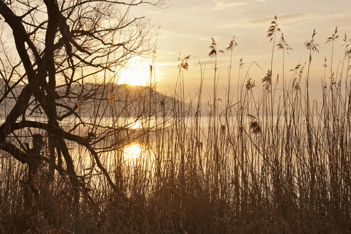 Germany, View of willow tree in Lake Constance - SH000789