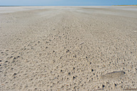 Denmark, Romo, Sand dunes at North Sea - MJF000256