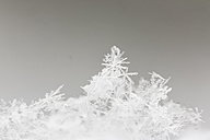 Germany, Hesse, Crystals of snowflakes, close up - SR000303