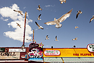 USA, New York,View of birds flying in Coney Island - SK001435