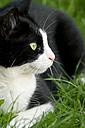 Germany, Baden Wuerttemberg, Cat sitting in grass, close up - LV000159