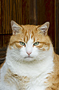Germany, Baden-Wuerttemberg, Cat sitting, close up - LV000160