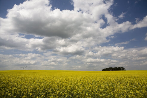 Germany, Brandenburg, wind turbines in yellow rape field - CNF000014