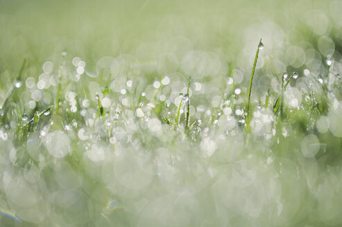 Germany, Bavaria, Dew on grass, close up - RUEF001096