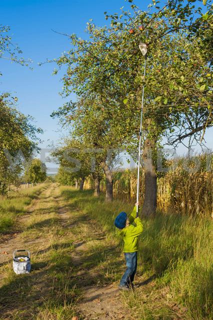 Germany, Saxony, Boy picking apples with stick - MJF000319