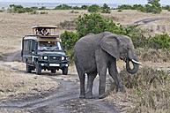 Africa, Kenya, Elephant in front of safari tourist at Maasai Mara National Reserve - CB000155