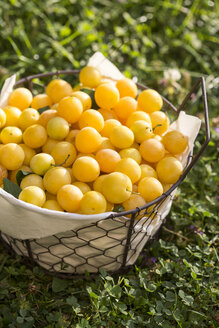 Germany, Bavaria, Basket full of mirabelle in garden - STB000043