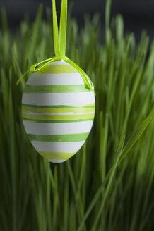 Easter egg, easter grass, studio - ASF005117