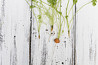Fresh baby carrots with stems and leaves on wooden board - SBDF000177
