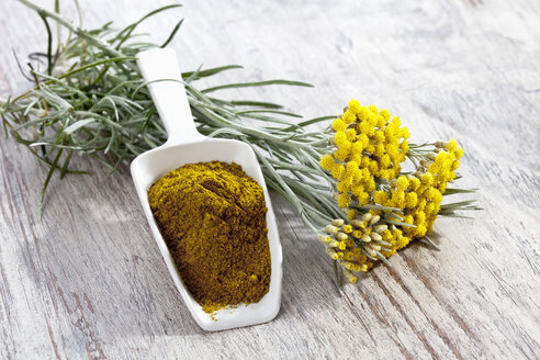 Curry plant (Helichrysum italicum) and shovel with curry powder - CSF019876