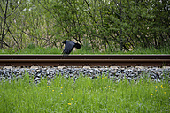 Cow and a rail track - AXF000473