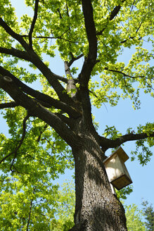 Wooden aviary in a tree - AX000485