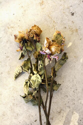 Withered roses, studio shot - AX000491