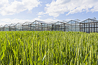 Germany, Baden-Wuerttemberg, Fellbach, wheatfield and greenhouses - WDF001938