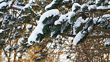 Germany, Bavaria, Fuerstenfeldbruck, snow covered branches - RD001143