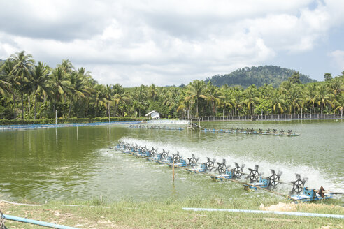 Thailand, Koh Chang, fish farm - DR000215