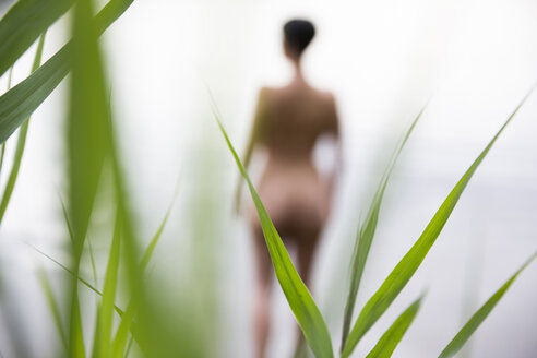 Germany, North Rhine-Westphalia, Cologne, View through reed to nude woman in a lake - JAT000375