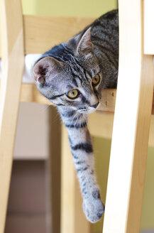 Kitten looking around - MHF000215