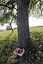 Germany, Rhineland-Palatinate, wooden box with windfall under a tree - PA000023
