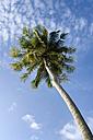 Thailand, Koh Lipe, Coconut palm - RNF001271