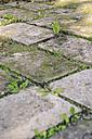 Germany, Coburg, garden, dandelion and weed between flagstones - VTF000042