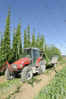 Germany, Bavaria, Haunstetten, Tractor in hop garden - LB000310