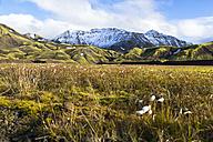 Iceland, Sudurland, Landmannalauger, Volcanic highland - STSF000173