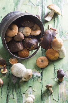 Different wild mushrooms on wooden table - STB000090